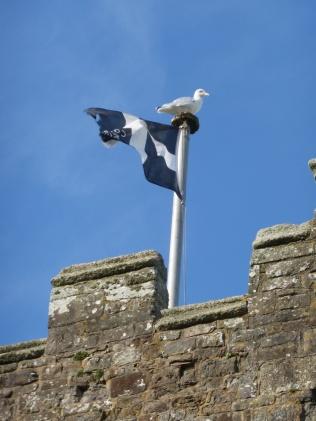 Marhamchurch: with added gull